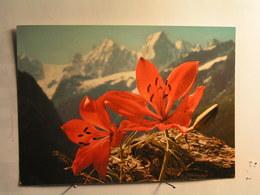 Fleurs - Lis Orangé - Flowers