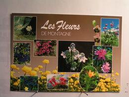 Fleurs - Fleurs De Montagne - Flowers