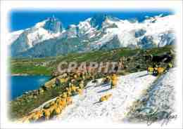 CPM Les Alpes Moutons - Breeding