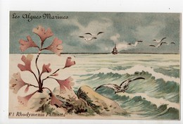 Les Algues Marines - 2 Cartes Anciennes - Rhodymenia Palmetta & Halymenia Lacerata - Flowers, Plants & Trees