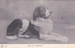 SUISSE---CANE Di S. BERNARDO--( Chien Saint-bernard )-voir 2 Scans - Unclassified