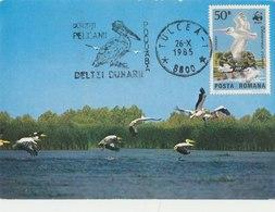 ROMANIA 1985 WWF Maxi Card With Pelicans.(Local Issue) - W.W.F.
