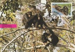 SIERRA LEONE 1983 WWF PostCard With Chimpansee. - W.W.F.