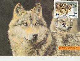 POLAND 1985 WWF PostCard With Wolf. - W.W.F.