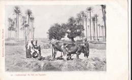 AO07 Egypt Postcard, Labourage Du Bie En Egypte - Early UB - Other