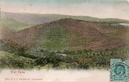 FRUIT FARMS-CAPE TOWN- VIAGGIATA 1906 - Sud Africa