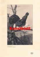 1188 Recknagel. Auerhahnbalz Auerhahn Kunstblatt 1907!! - Stampe