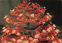 Oiseau Dans Clérodendron Martinique - Birds