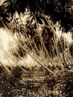COCONUT PALMS AGUADILLA  PUERTO RICO CARIBE    +- 20*15CMFonds Victor FORBIN (1864-1947) - Lugares
