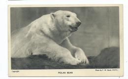 London Regents Park Zoo Wild Animal 1940s  Unused Postcard F.w.bond Polar Bear - Bears