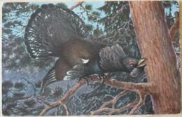 Auerhahn Künstler Jagd Chasse Hunting Korhoen Volaille Oiseau Capercailzie Tetrao Urogallus - Vögel