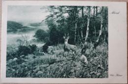 Abend Chr. Kröner Wald Reh Deer - Tierwelt & Fauna
