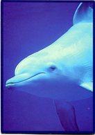 DELFIN, DAUPHIN, DOLPHIN. FOTO: PHOTODISC, ARGENTINA CIRCA 2000's POSTAL PUBLICIDAD -LILHU - Delfines