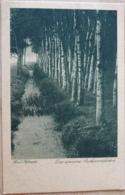 Das Einsame Birkenwäldchen Hofmeister - Bäume