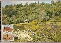 Zimbabwe & Maximum Card, National Tree Day, Brachystegia Spiciformis  1981 (258) - Zimbabwe