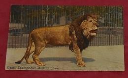 Basel - Zoologischer Garden : Löwe :::: Animaux - Lion - Portrait - Faune -  Parc Zoo -------------- 501 - Lions