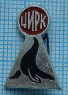 USSR / Badge / Soviet Union / RUSSIA.  Circus. Fauna. Seal. - Animals