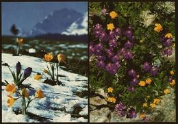 2 X Blumen  -  Hundsveilchen / Schwefelanemonen  +  Krokusse  -  DJH / Deutsche Jugend Herberge  -  Ca. 1983    (11375) - Flowers