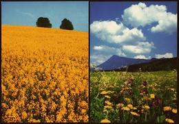Sommerwiese In Der Nähe Von Ruhpolding  -  Rapsfeld Bei Razeburg  -  DJH-Ansichtskarten  Ca.1983  (11376) - Flowers, Plants & Trees
