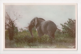 G-915 Kruger National Park South Africa Elephant Tinted Real Photo RPPC - Other