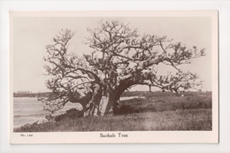 G-931 Kenya Africa Baobab Tree Real Photo RPPC Postcard - Other