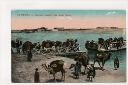 I-680 Kantara Egypt Camels Passing The Suez Canal Early Postcard - Other