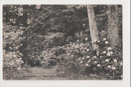 J-799 Buck Hill Falls Pennsylvania Rhododendron Postcard - United States