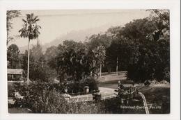 J-987 Penang Malaysia Botanical Garden Early Real Photo Postcard - Postcards