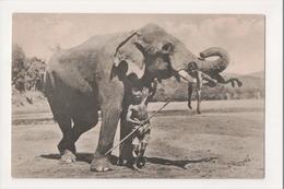 K-193 Ceylon Sri Lanka Elephant With Boy In Trunk Tusks Early Postcard - Postcards