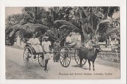 K-213 Colombo Ceylon Rickshaw And Bullock Hackery Early Postcard - Postcards
