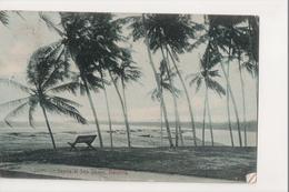 K-271 Bentota Ceylon Scene At Sea Shore Postcard 1912 - Postcards