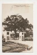 K-396 Santiago Cuba Ceiba Tree Surrender Spanish American War Army Real Photo - Postcards