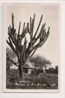 K-556 Termas De Rio Hondo Argentina El Cactus And Donkey Real Photo RPPC - Postcards