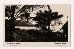 K-607 Barranquilla Colombia Coconuts At Salgar Real Photo Postcard - Postcards