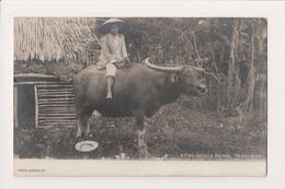 K-830 Manila Philippines Islands A Fine Saddle Animal Real Photo Postcard - Postcards