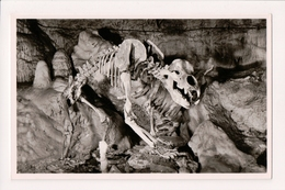 K-978 Germany Barenhohle - Karlshohle Bear Skeleton Cave Real Photo Postcard - Other