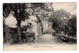 CPSM Cornus Aveyron 12 Entrée Du Village Bœuf En Premier Plan éditeur Ch Lassalle à Millau N°1 - France