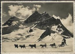 11282267 Jungfraujoch Polarhunde Jungfraubahn - BE Berne