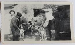 Photo Originale Ferme à Roz Landrieux 35 Personnages Vache Veaux Paysans Jean Nanette - Orte