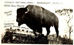 CANADA CANADIAN NATIONAL PARK RPPC WAINWRIGHT ALTA RAILWAYS BUFFALO BISONS  +- 13*9CMFonds Victor FORBIN (1864-1947) - Trenes