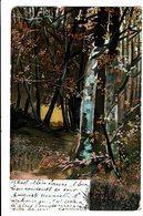CPA - Carte Postale-Belgique Dans La Foret -1904  VM4679 - Photographie
