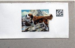 Svizzera - Webstamp - Cane San Bernardo (frammento) - Svizzera
