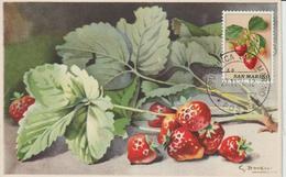 Saint Marin Carte Maximum 1973 Fraises 841 - Lettres & Documents