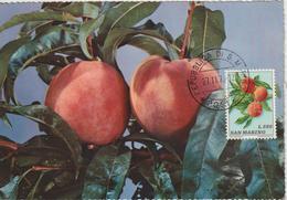 Saint Marin Carte Maximum 1973 Peches 846 - Lettres & Documents
