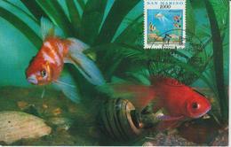 Saint Marin Carte Maximum 1991 Poissons D'aquarium 1276 - Lettres & Documents