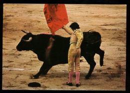 C1701 CORRIDA DE TOROS COURSE DE TAUREEAUX BULL FIGHT FEAST BARCELONA - Corrida