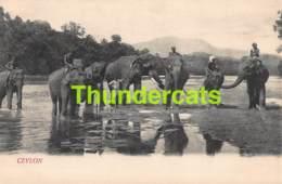 CPA SRI LANKA CEYLON  ELEPHANTES ELEPHANTS - Sri Lanka (Ceylon)