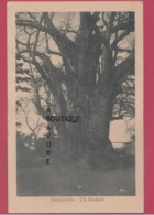 AFRIQUE--CONGO --BRAZAVILLE--Un Baobab - Brazzaville
