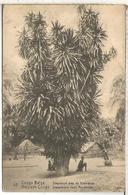 CONGO BELGA ENTERO POSTAL SELLO ADICIONAL DESPRENDIDO ARBOL DRAGO TREE - Árboles