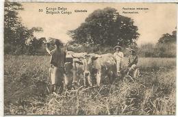 CONGO BELGA ENTERO POSTAL SELLO ADICIONAL DESPRENDIDO VACA BUEY COW AGRICULTURA - Kühe